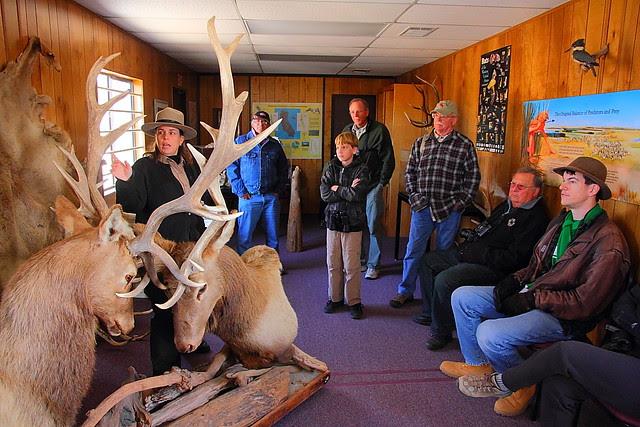 IMG_2803 Tule Elk State Reserve