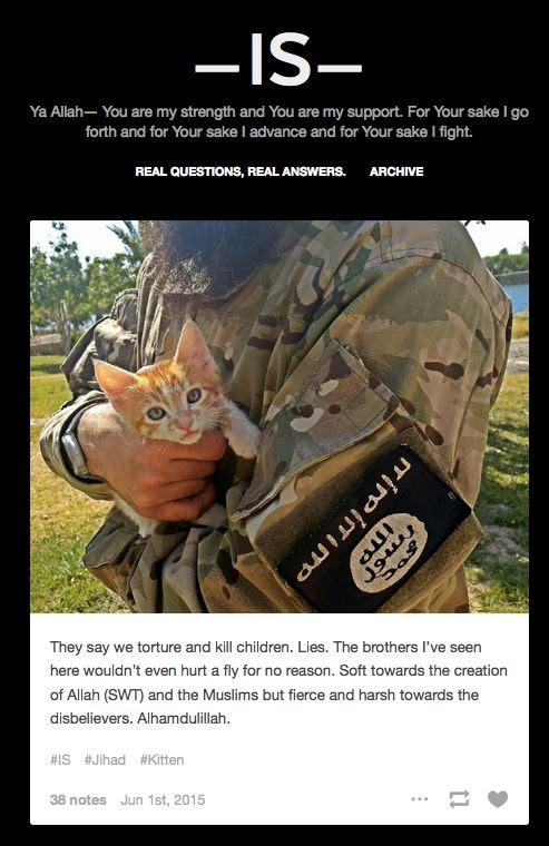 Israfil Yilmaz is kittens
