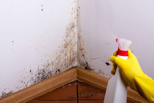 How to Cleanup Mold on Walls - Mold Removal Tips