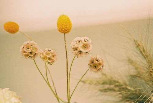 delicate flowers.