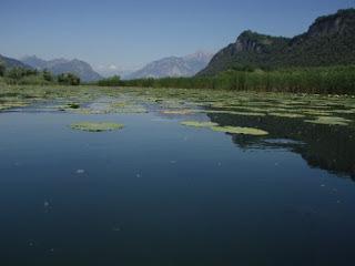 la vegetazione palustre lungo l'Adda emissario - FOTO DI EPPILUK
