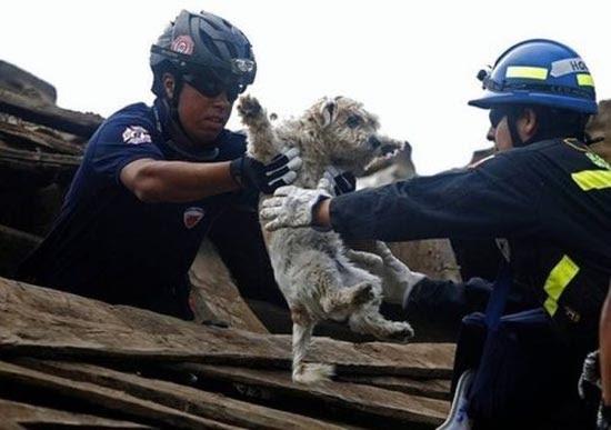 Διάσωση ζώων (8)