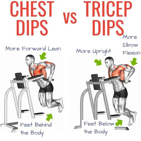 essential  multi joint exercises training splits