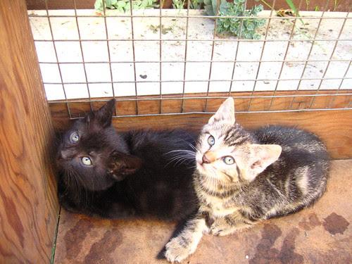 We grow kittens