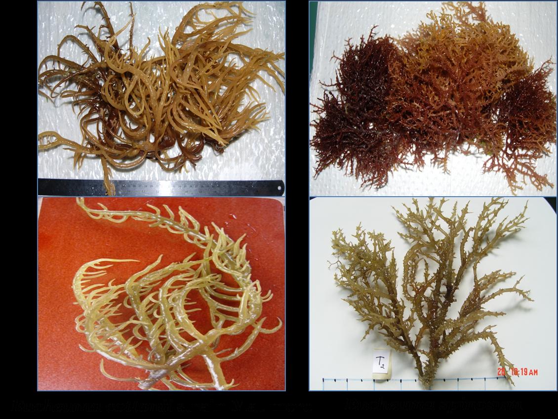 Kumpulan Budidaya Budidaya Rumput Laut