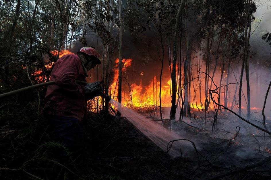 Incendio forestal en Carregal do Sal