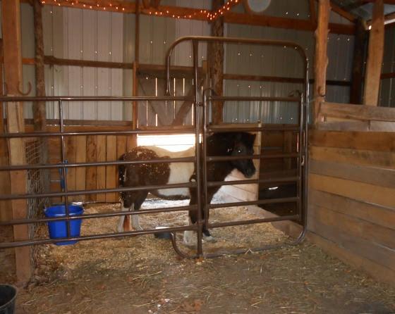 brokie: Barn plans for 2 horses