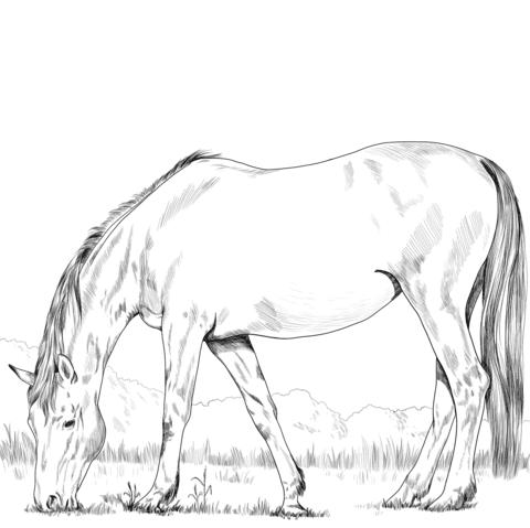 wild pferde ausmalbilder zum ausdrucken kostenlos - malvorlagen
