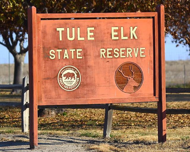 IMG_3855 Tule Elk State Reserve