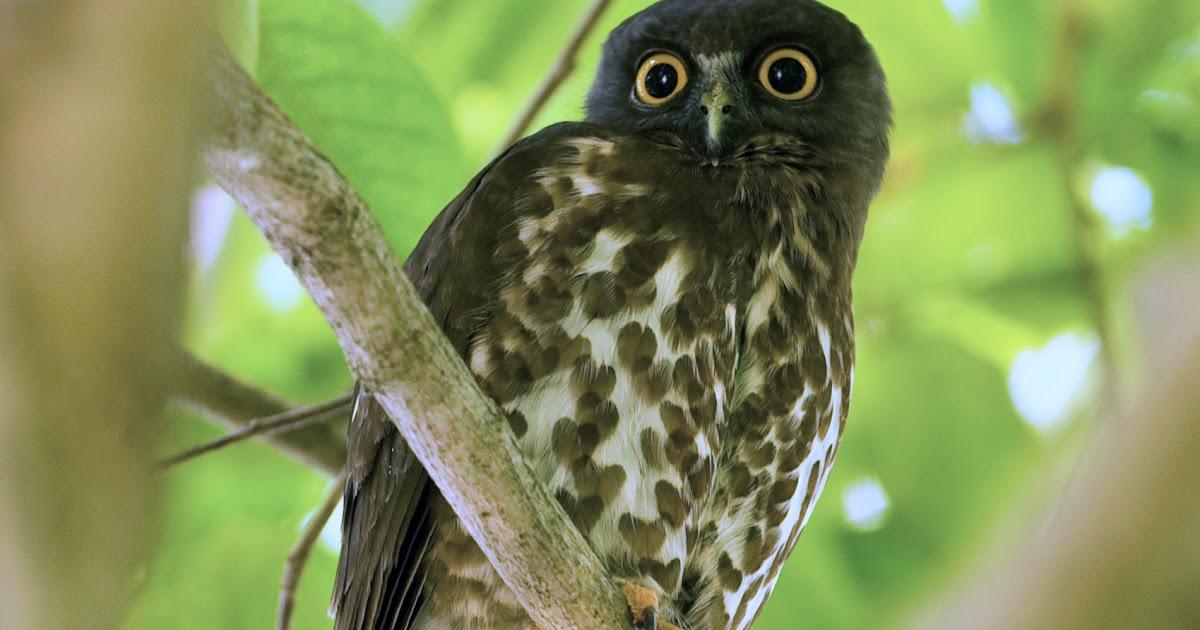 Tanda Tanda Burung Hantu Masuk Rumah Info Terkait Rumah