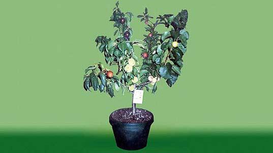 Parakseno.gr : dentrosalad4 Ένα δέντρο… φρουτοσαλάτα!