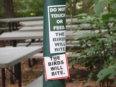 birds will bite