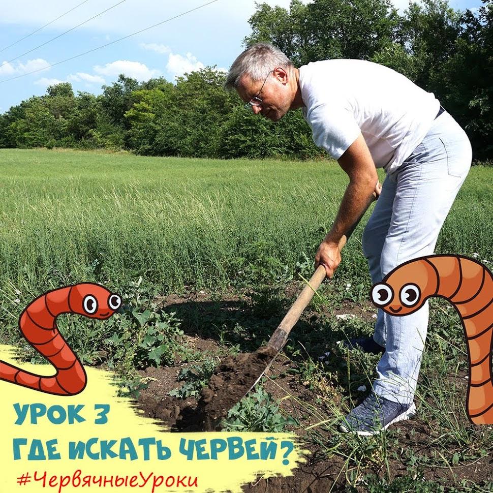 где живут дождевые черви