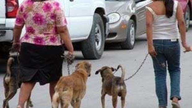 Anuncian exterminio masivo de perros callejeros, tuiteros responden con #ChiapasMataPerros