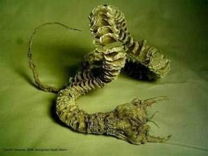 mongolian_death_worm
