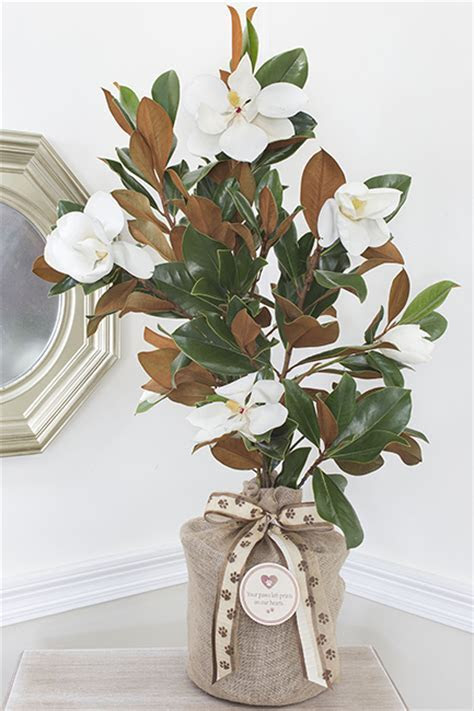 Seeds Of Life Pet Sympathy Southern Magnolia Tree   Large