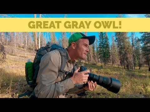 Wondered Photographing Gray Owls in the Wild