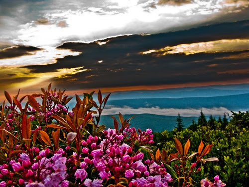 Summer Sunrise Mountain Flowers