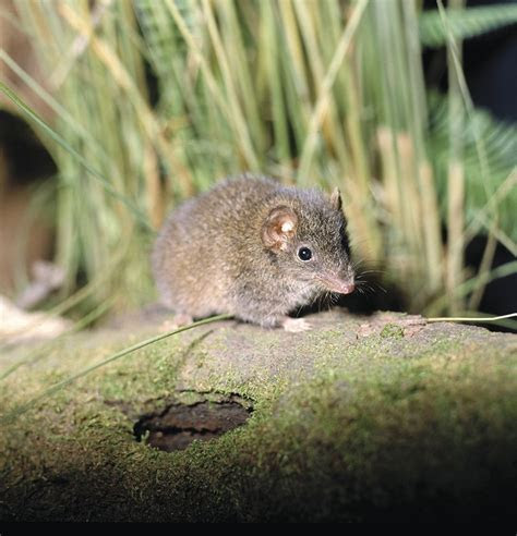 Creature Feature   Southern Ocean Retreats