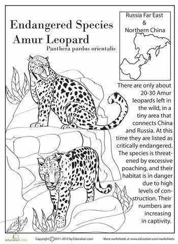 Amur Leopard coloring, Download Amur Leopard coloring for ...