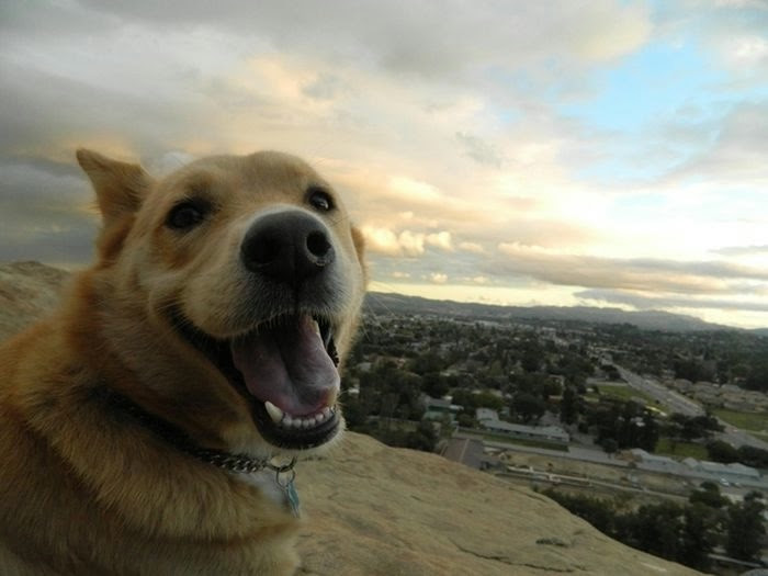 happiest_dogs_on_the_internet_23 (700x525, 98Kb)