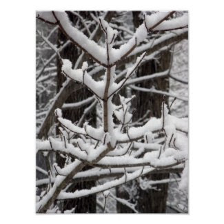 Snow-covered Branches Posters