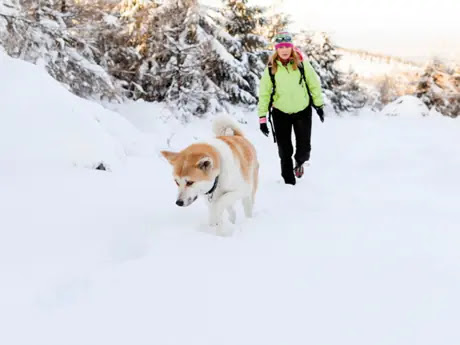 5 Dog Safety Tips for Winter Hikes | ACTIVE
