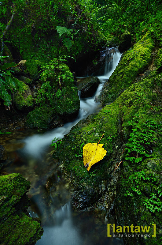 Verdant stream (around Imugan Falls)