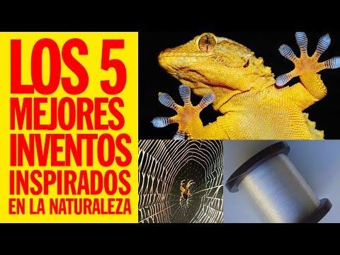 Top 5 - Los 5 mejores inventos inspirados en la naturaleza