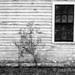Pierce Ranch Window