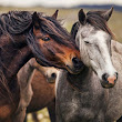 Mare reproductive infections - Equine Medical Services