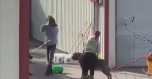 Dog Daycare Center Under Investigation Following Video Of Abuse