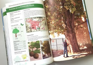 árboles_singulares_IEA_GrupoEnuno_05