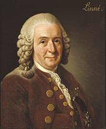 """Portrait of Linnaeus on a brown background with the word """"Linne"""" in the top right corner"""