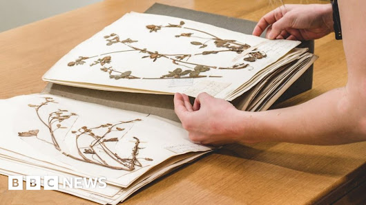 Nation's botanical treasure troves 'under huge threat' - BBC News
