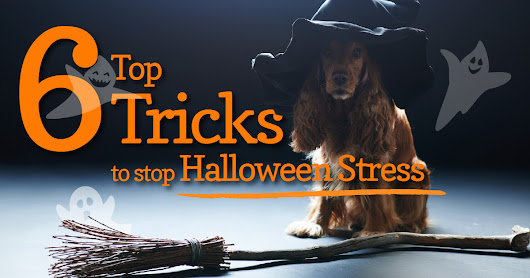 6 Tips for Dogs Suffering Halloween Stress - Dogs Naturally Magazine