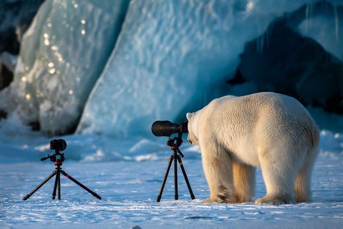 Photographie de la faune