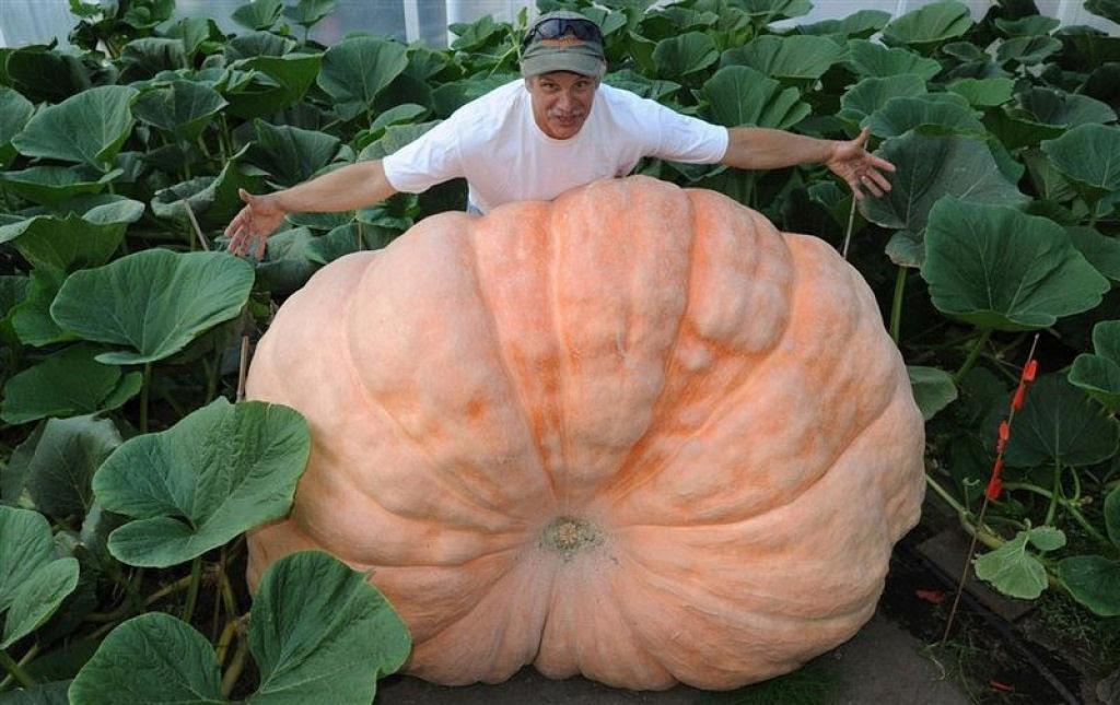Você sabe por que os vegetais do Alasca são gigantescos? 01