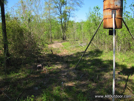 Planting Spring Deer Food Plot - AllOutdoor.com