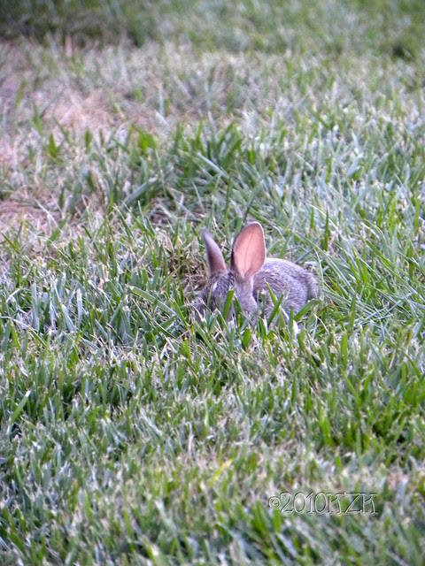 DSCN6670 Baby Bunny