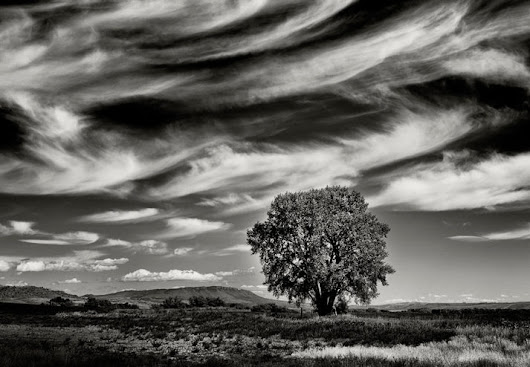 Single Trees - Black and White Landscape Photography by Jay Wesler