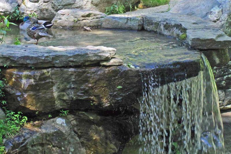 Garvin Woodland Gardens 28