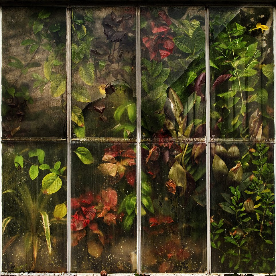 Autumnal: Anthony Wallis took this photo called Waterlily House Window in the Royal Botanic Gardens in Kew