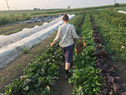 A Fine Time of Year for Organic Farming — Knuckle Down News, Week 12 - Knuckle Down Farm