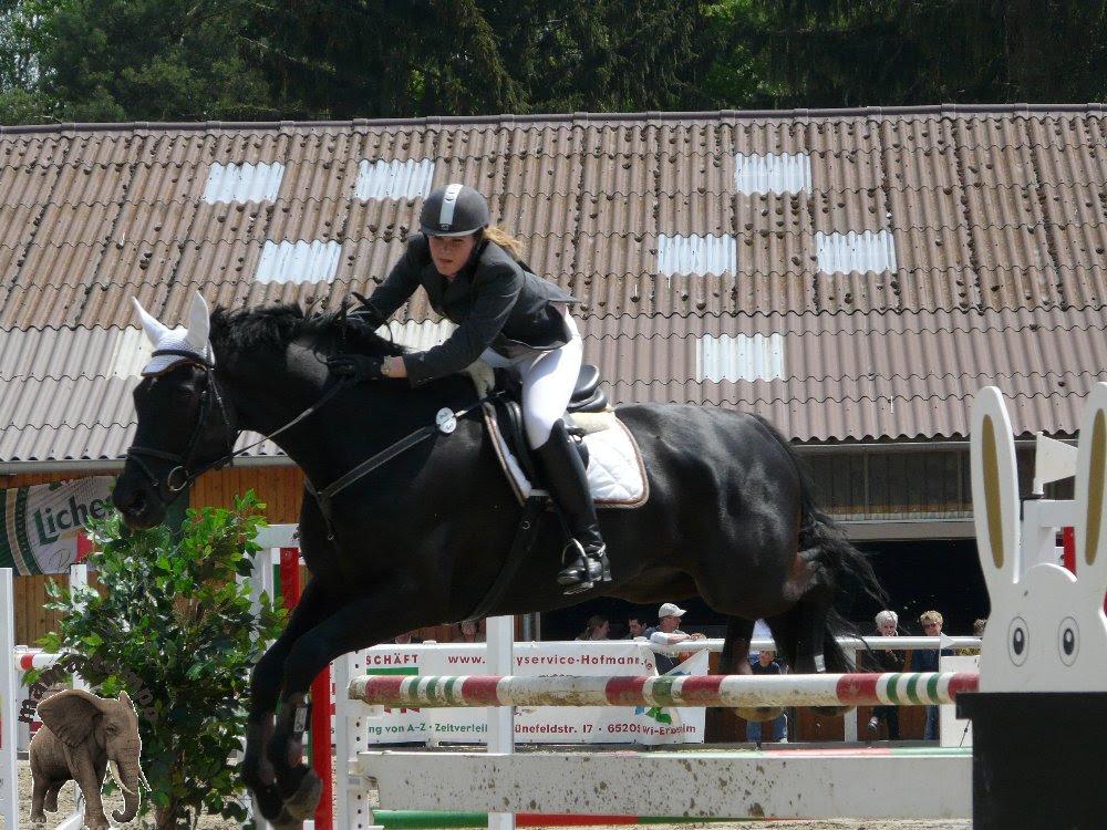 Springreiten 02, Pferde, Pferd, Horse, Turnier