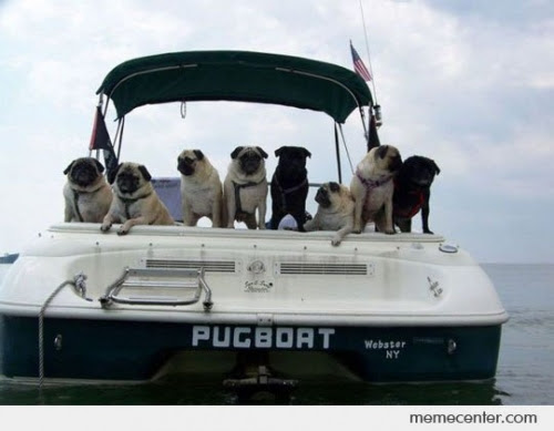 Attention Pug Lovers! You Will Get These Images. I Just Love Number 14! - Cools And Fools