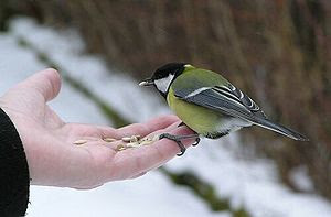 Bird feeding from hand