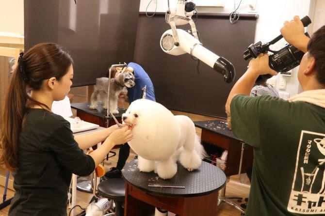 トリミングムペットホテムム犬だ保育園 DOG DIAMOND ドッグ