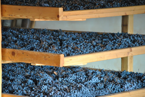 Do you really know how Amarone della Valpolicella is made?
