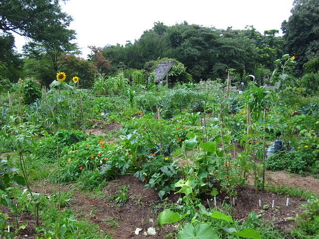 The Children's Garden. Photo by Rebecca Bullene.